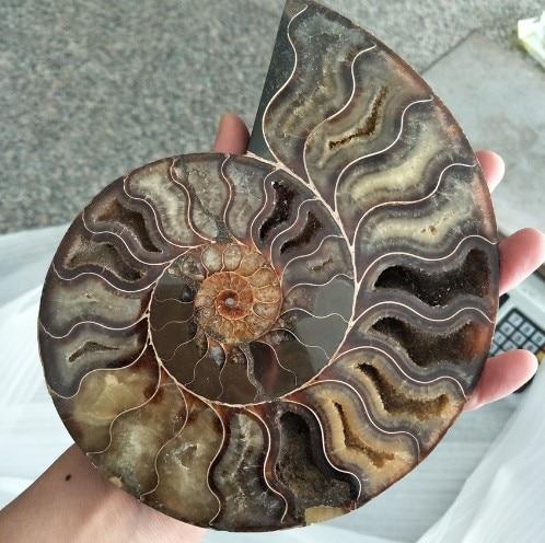 Большие размеры, окаменелости, Радужный аммонит, натуральные камни и минералы, образец