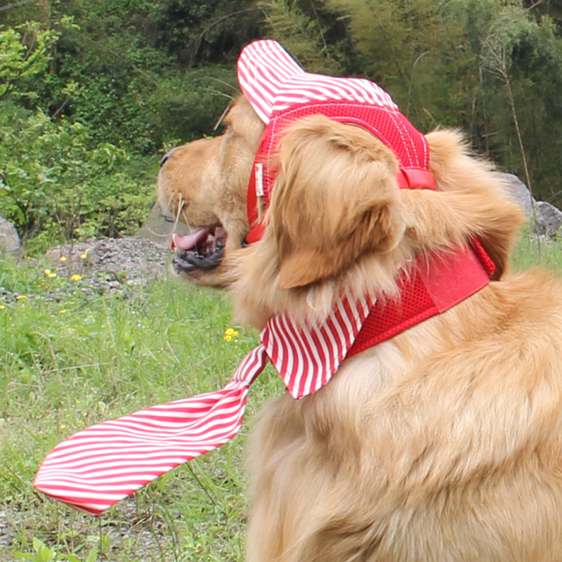 Strisce traspirante Pet Dog Hat Berretto Da Baseball di Viaggi Antivento  Sport Cappelli di Sun Per Puppy Cani di Grossa taglia Costume pet Grooming  ... ff744b5e1fcc
