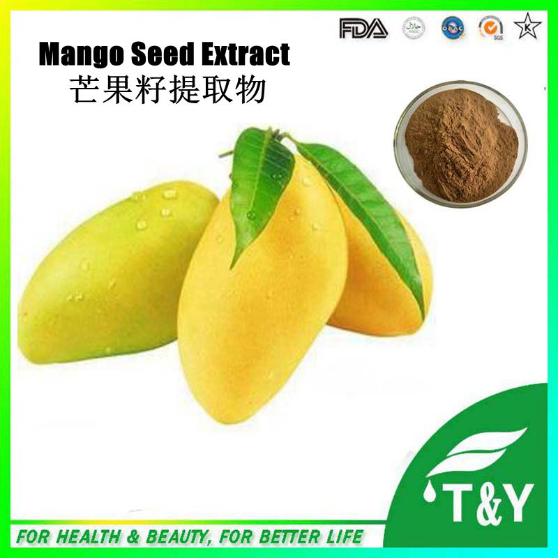 African Mango Seed Extract Powder, African Mango Seed P.E., African Mango Seed Powder Extract 600g/lot