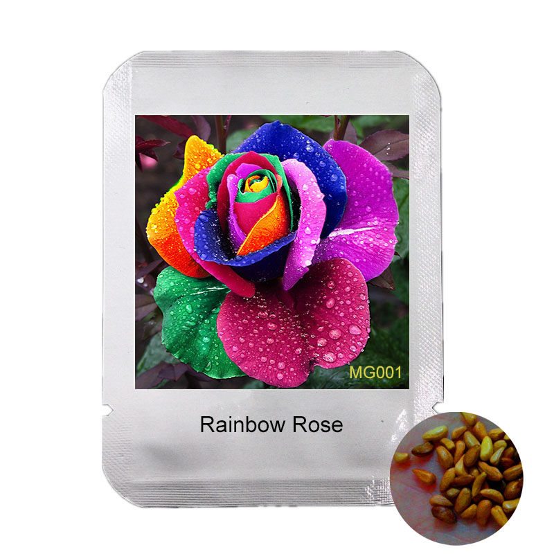 Professional Packaging 100 Seeds Rare Holland Rainbow Rose seed colorful Home Garden plant rare rainbow rose flower seeds,#MG001