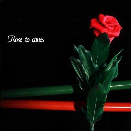 Rose à cannes-fleur tours de magie, mentalisme, magie de la rue, scène, gros plan, comédie, blague, comme On le voit à la télé, Illusions, jouets Magia,