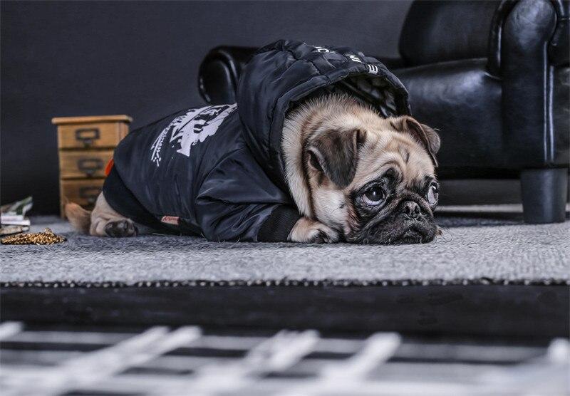 Labrador large dog clothes winter (3)