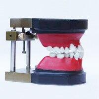 Dental manikin dental Typodont Model Dental Orthodontic model for training practice with wax teeth model and occluder