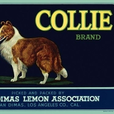 Collie Los Angeles CA Label Poster Print (24 x 36)