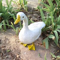 large 50x45cm white duck model foam&feathers simulation duck handicraft home garden decoration gift p0248
