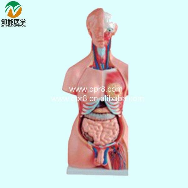 Both Sexes Torso Model (23 Parts) 85cm BIX-A1035 WBW240 anatomy of the torso model 85cm male torso 19 parts