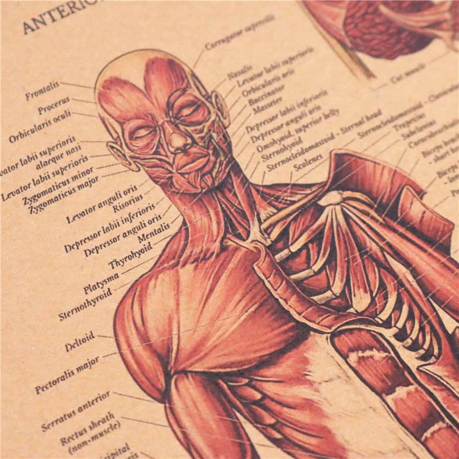 El Cuerpo Humano Estructura Del Sistema Muscular Hd Vintage Póster De Papel Bar Decoración Del Hogar Retro Papel Kraft Pintura 42x30cm