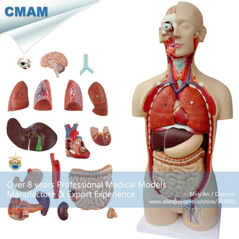 Erfreut Anatomie Modell Online Fotos - Menschliche Anatomie Bilder ...