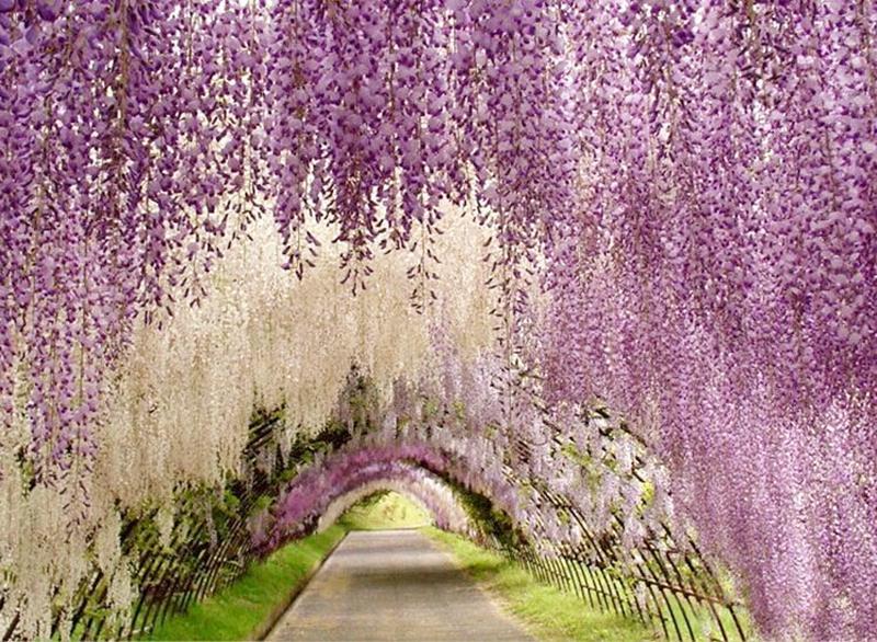Hochzeitsfest bevorzugt künstliche Blumen 1.1M Silk Blumen-elegantes - Partyartikel und Dekoration - Foto 1