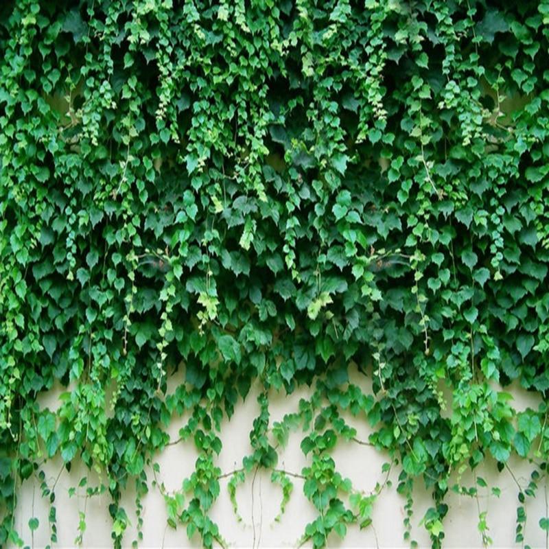 Us 8 4 52 Off Photo Wallpaper 3d Boston Ivy Green Plant Mural Hotel Living Room Tv Sofa Backdrop Wall Home Decor Wallpaper Papel De Parede 3 D In