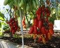 Семена помидоров 200 томатном дерева NO-ГМО семена овощных культур для дома сад, лучшее питание для ужин дети любят овощи