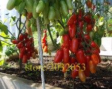 tomato seeds 200 tomato tree  NO-GMO vegetable seeds for home garden ,best nutrition for dinner kids love vegetable