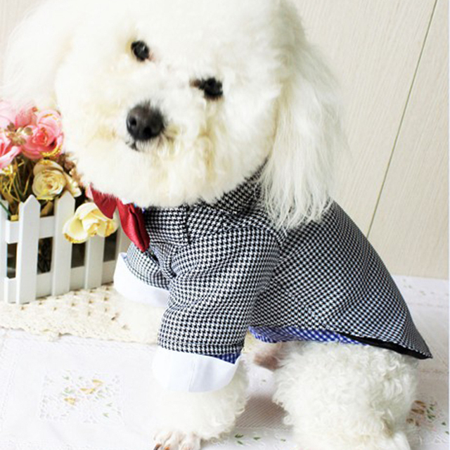 Colorful Dog Suit For Wedding Pictures - Wedding Ideas - nilrebo.info
