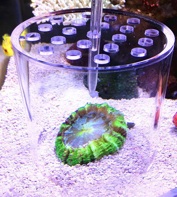 Esófago de alimentación de Coral. tubo de succión líquida. alimentador de Coral. aditivo líquido. Máquina de alimentación de acuario de agua de mar
