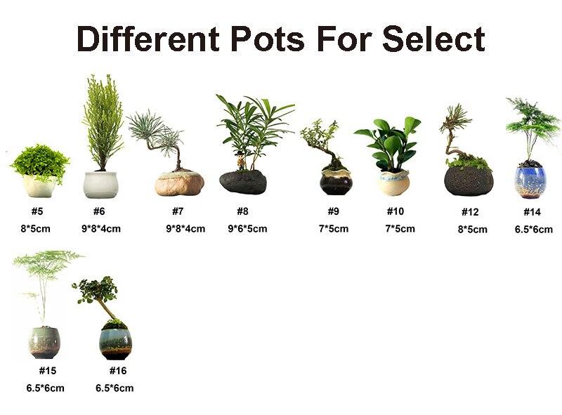 floating pot-2