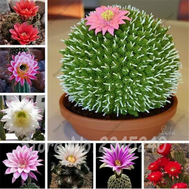 Plantas Suculentas Cuidados. Good Las Suculentas Son Unas De Las Ms ...