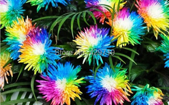 Flower seeds colorful Himalayan orchid seeds 20 potted orchid plant beautiful courtyard Bonsai flower seeds Home gardening DIY