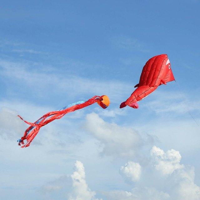 2016 Superventas 3D Dolphin En Forma de Enorme Sin Marco Suave Único Estilo Kite Parafoil Kite Deporte Al Aire Libre Juguetes Voladores
