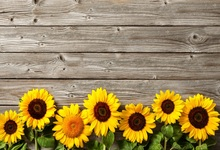 Laeacco Old Wooden Board Texture Sunflowers Baby Photography Backgrounds Customized Photographic Backdrops For Photo Studio