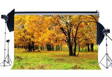 Backdrops Pano de fundo de outono Folhas Douradas Meadow Backdrops Árvores Da Selva Floresta Grama Natureza Ao Ar Livre Fundo Fotografia