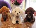 Super lindo 1 unid 20 cm de dibujos animados mini Caniche Peluche perro de peluche encantador muñeco de peluche de juguete del muchacho los niños de San Valentín regalo del día