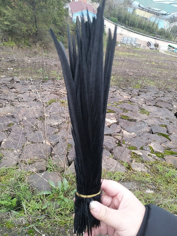 Wholesale Free Shipping 50 Pieces 11-14 Inch / 28-35 Cm Black Pheasant Tail Feathers, Home Decoration Wedding Center Focus