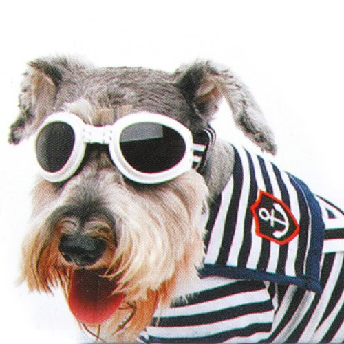 Doggie Sunglasses Goggles  compare prices on small dog sunglasses online ping low