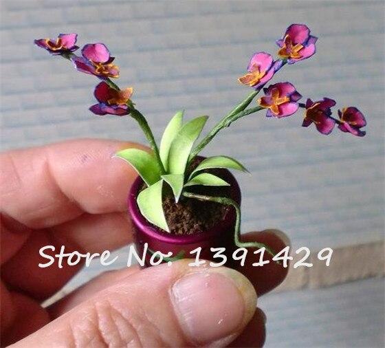 orchidee zaden