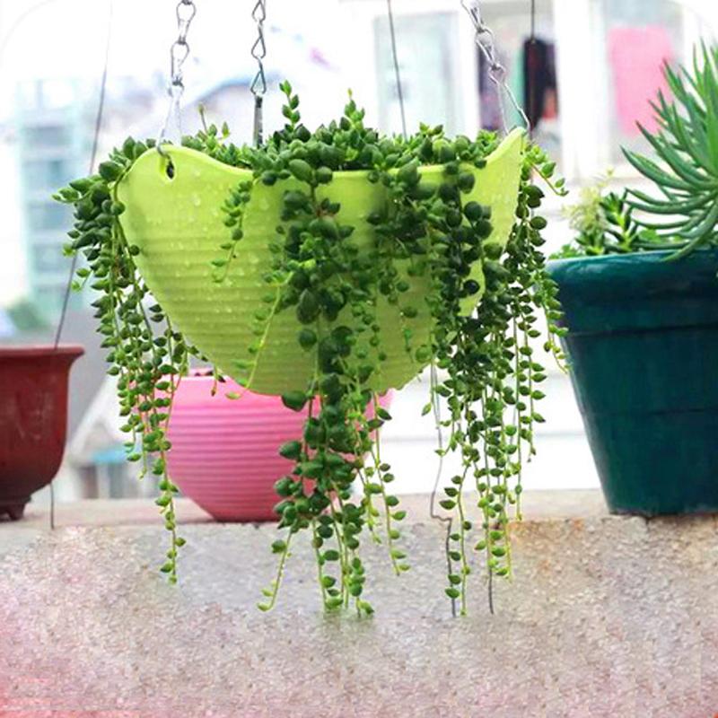 maceta multicolor jardinera olla colgando backetplant con gancho cuelgan cesta para bonsai olla venta