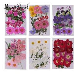 Beautiful Multiple Real Pressed Leaves Natural Dried Flowers for Art Craft Scrapbooking Card Making Resin Jewelry Craft DIY