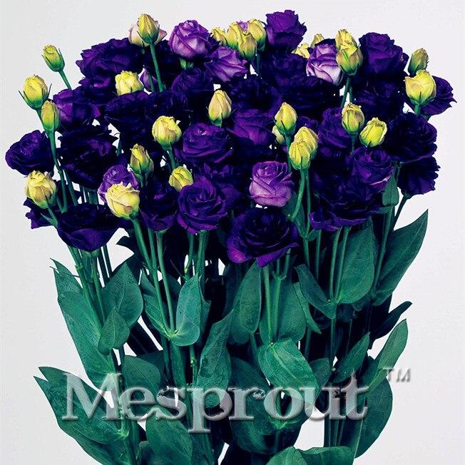 Lisianthus Eustoma grandiflorum sementes 100 pcs sementes de Flores Para Casa Jardim Bonsai Plantas Frete grátis