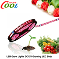 LED Grow Lights DC12V Red Blue Growing LED Strip 5050  for Greenhouse Hydroponic Plant 5m/lot
