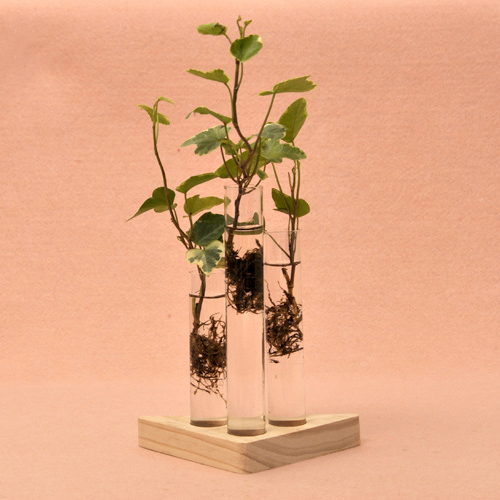 Glass vase clear picture more detailed picture about for Test tube flower vase rack