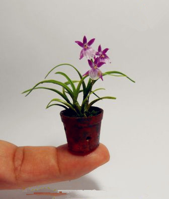 20pcs Mini Orchid flowers for rooms perennial indoor flowers for home and garden potted flowers Phalaenopsis