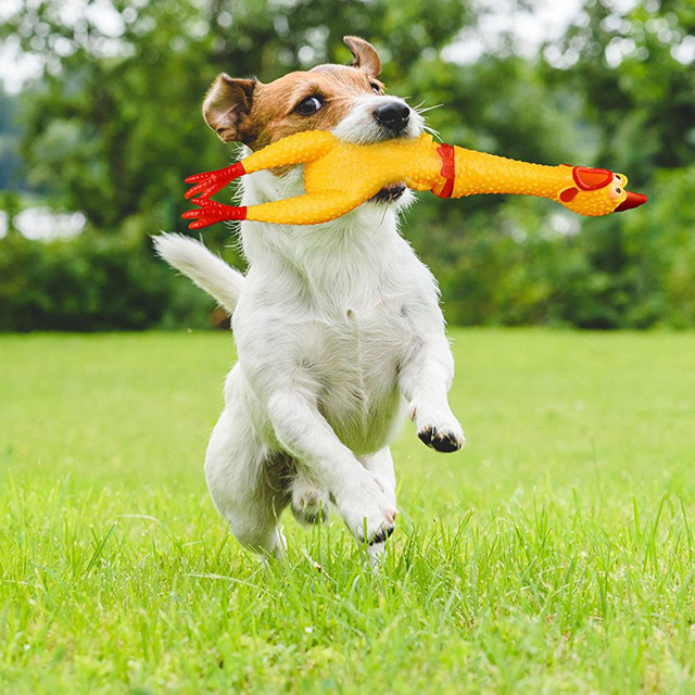 Image result for dogs with squeezing sound toys