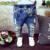 2017 Marca Nova Moda Outono Meninos Meninas calças de Brim Do Bebê Crianças Calças Buracos Quebrados Calças 2-7Yrs Crianças Calças Crianças Roupas