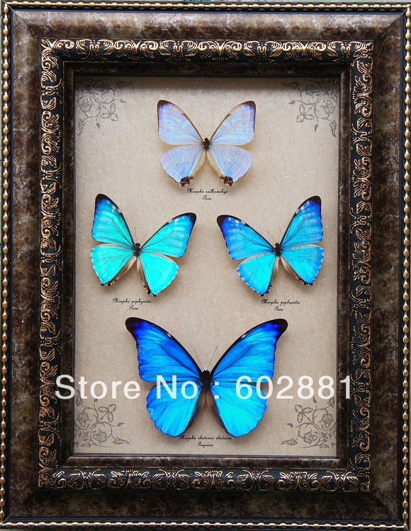P2099 A1 Quality 4pcs Real Butterfly Home Art10inch Wooden FrameChristmas Wedding GiftHome Art DecorationNovelty Wall On Aliexpress