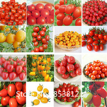 Sale!200 pieces 10 Colors NON-GMO  tomato seeds 2016 New Organic Vegetable Seeds For Garden