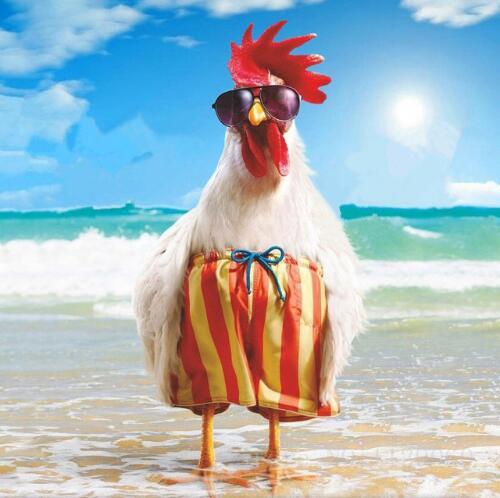 87+ Gambar Ayam Keren Paling Keren