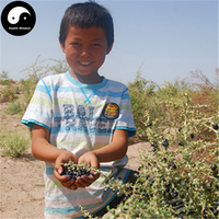 Buy Real Black Goji Berry Seeds 200pcs Plant Black Wolfberry Grow Gouji Berry