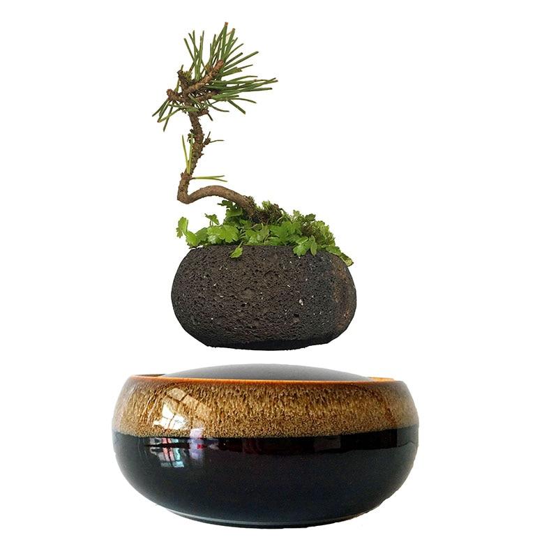Air Bonsai Floating Plants