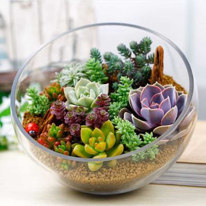 500 stks/zak Rare Succulente Planter Bonsai Mix Lithops Ingemaakte Pseudotruncatella Living Stone Tuin Vetplanten-planten Bloempot