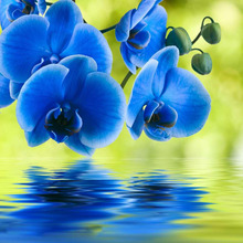 5d Diamond Embroidery Blue Orchid Flowers Painting Rhinestones Cross Stitch Needlework Set Beads Square mosaic