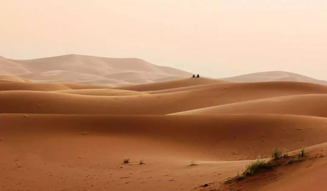 生气的骆驼(火遍朋友圈)