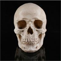 Top Quality 100% Resin Human Skull Head Design Ashtray Container Replica Creative Home Bar Decor Halloween Decorations Trop Toys