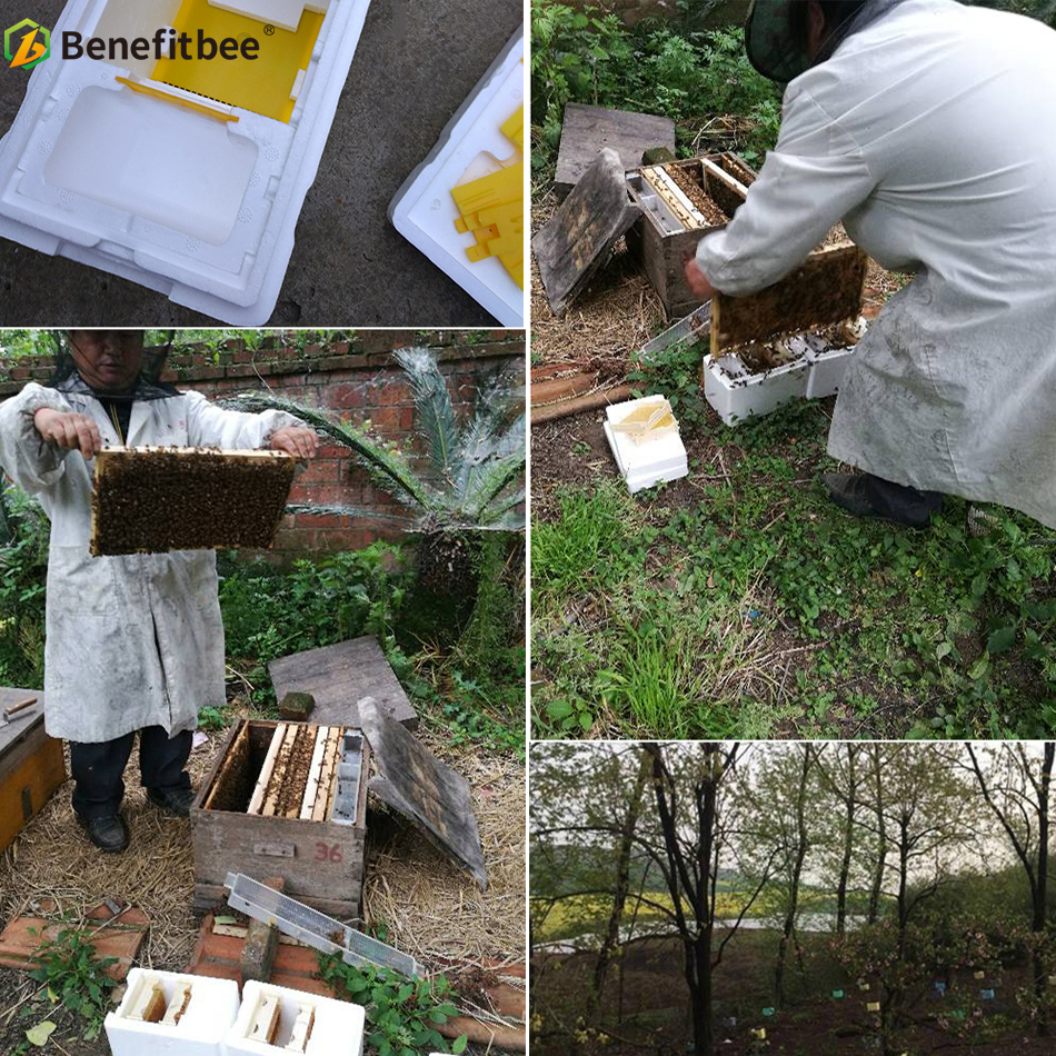 Image 5 - Beekeeping BeeHive Box Harvest Beehive Queen Mating Hive Benefitbee Brand Queen Mating Beehive Beekeeping Tool Apiculture-in Bee Hives from Home & Garden