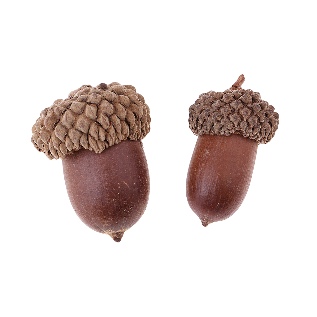 10Pcs Natural Mini Acorns Dried Flowers Christmas Accents Home Decoration Ornaments Lightweight Natural Dried Acorns