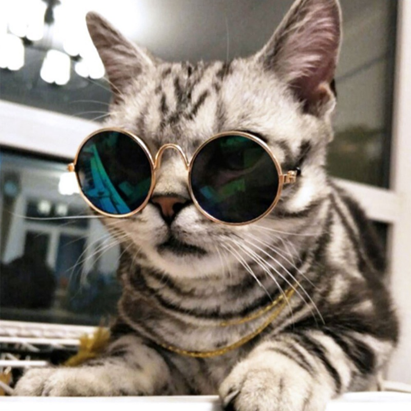 Glasses Small Pet Dogs Cat Glasses Sunglasses Eye-wear Protection Pet Cool Glasses Pet Photos Props Random Color For Gatos