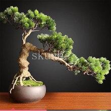 Big Sale!50pcs juniper bonsai tree potted flowers office bonsai purify the air absorb harmful gases juniper garden