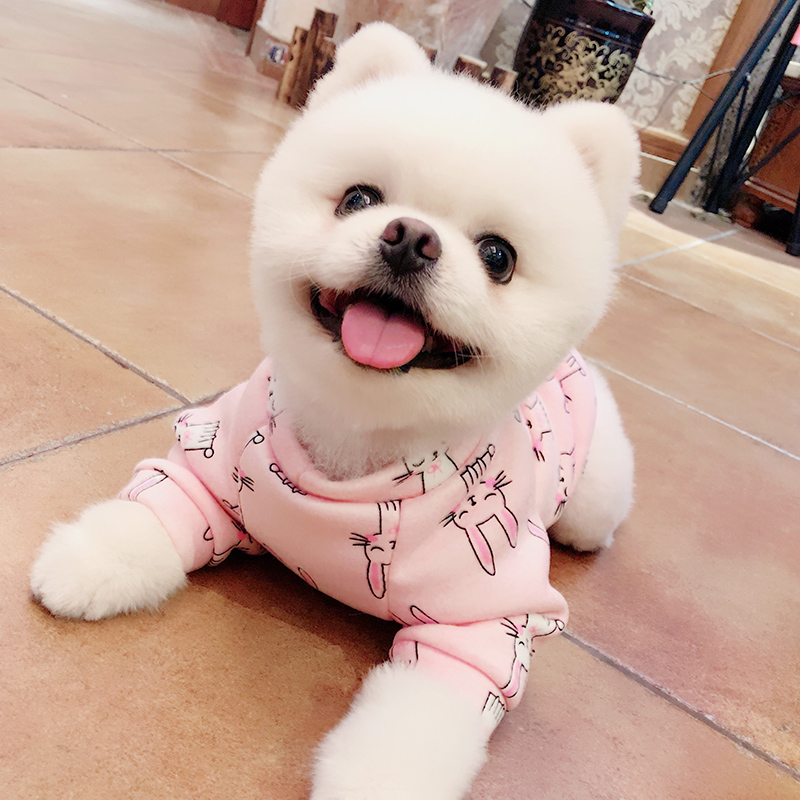 Pomeranian dog clothes xs (20)